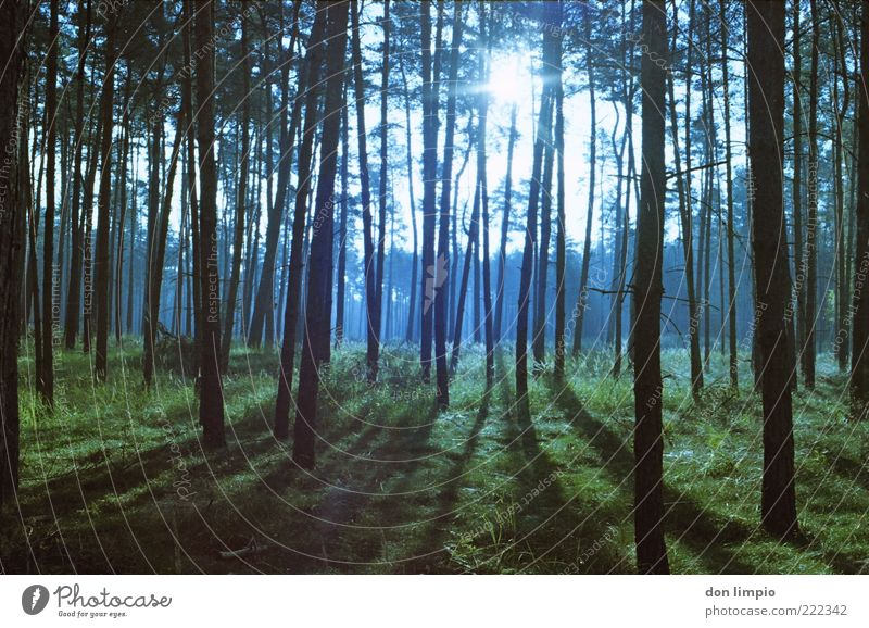 clearing Environment Nature Sunlight Autumn Beautiful weather Plant Tree Grass Forest Wood Bright Tall Natural Calm Colour photo Exterior shot Deserted Evening