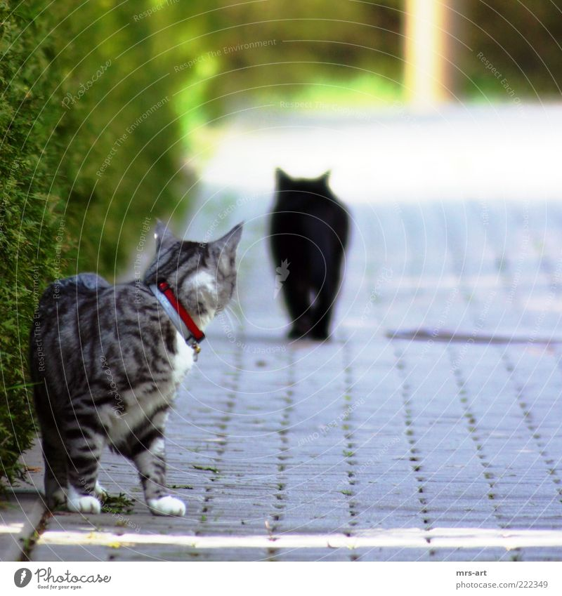 Love Black Animal Emotions Cat Friendship Moody Together Pair of animals Walking Romance Joie de vivre (Vitality) Discover Rotate Pet Infatuation