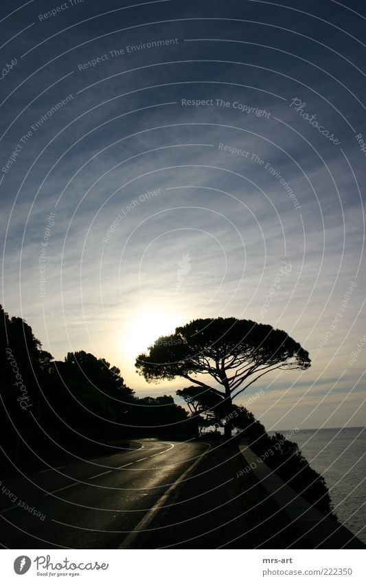Sun Ocean Vacation & Travel Coast Curve Treetop Mediterranean sea Southern France Cote d'Azur Coastal road