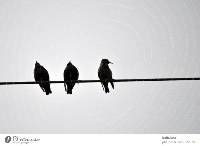 Nature Animal Bird Sit Wing Group of animals Wild animal High voltage power line 3