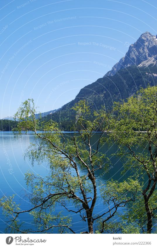 Eibsee Summer Mountain Environment Nature Landscape Plant Water Sky Cloudless sky Beautiful weather Tree Alps Lakeside Colour photo Exterior shot Deserted Day