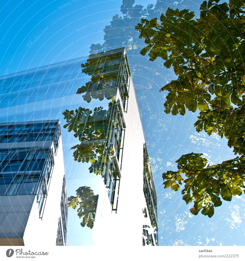 semi Cloudless sky Esthetic House (Residential Structure) Office building Window Facade Cladding Tree Green Blue Double exposure Corner Worm's-eye view White