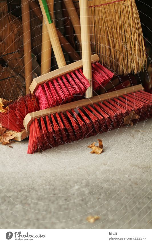 loud brooms Work and employment Gardener Clean Diligent Cleanliness Independence Services Teamwork Environmental pollution Broom Broom closet Autumn
