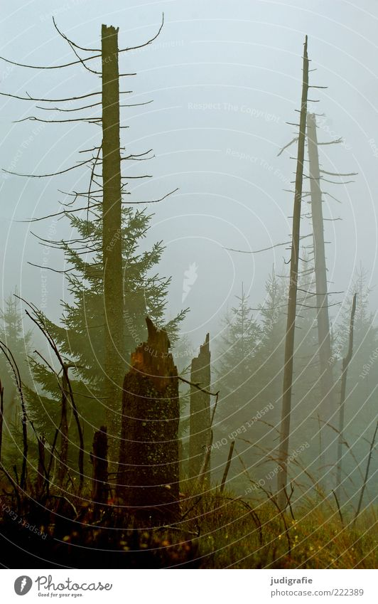 Nature Tree Plant Forest Cold Dark Autumn Death Landscape Moody Environment Fog Growth Broken Climate Threat