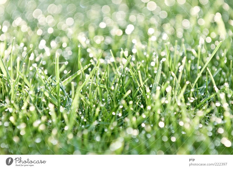 Nature Water Green Plant Meadow Grass Bright Environment Wet Drops of water Fresh Lawn Damp Dew Bizarre Blade of grass