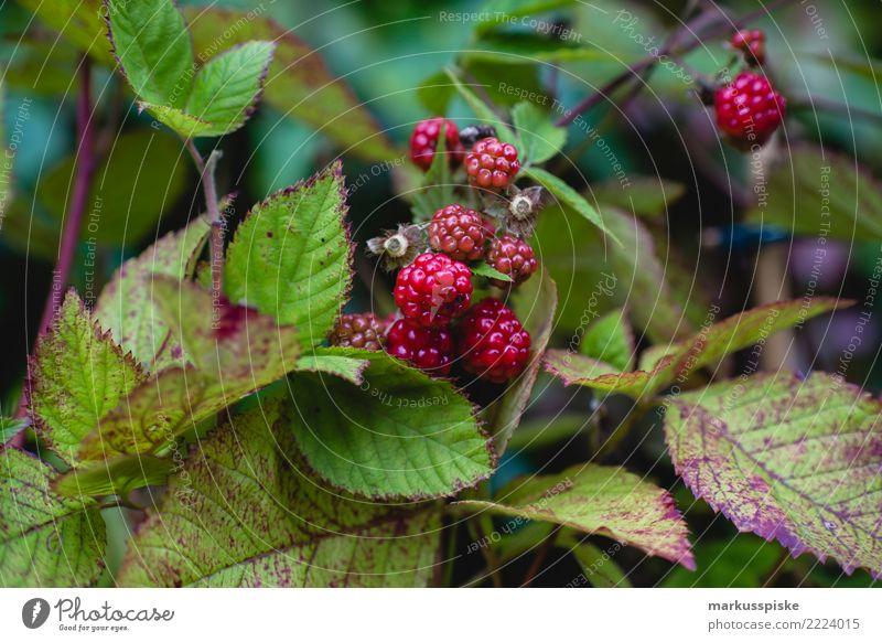 Raspberries Urban Gardening Food Fruit Berries Raspberry Nutrition Eating Picnic Organic produce Vegetarian diet Diet Fasting Slow food Finger food Lifestyle