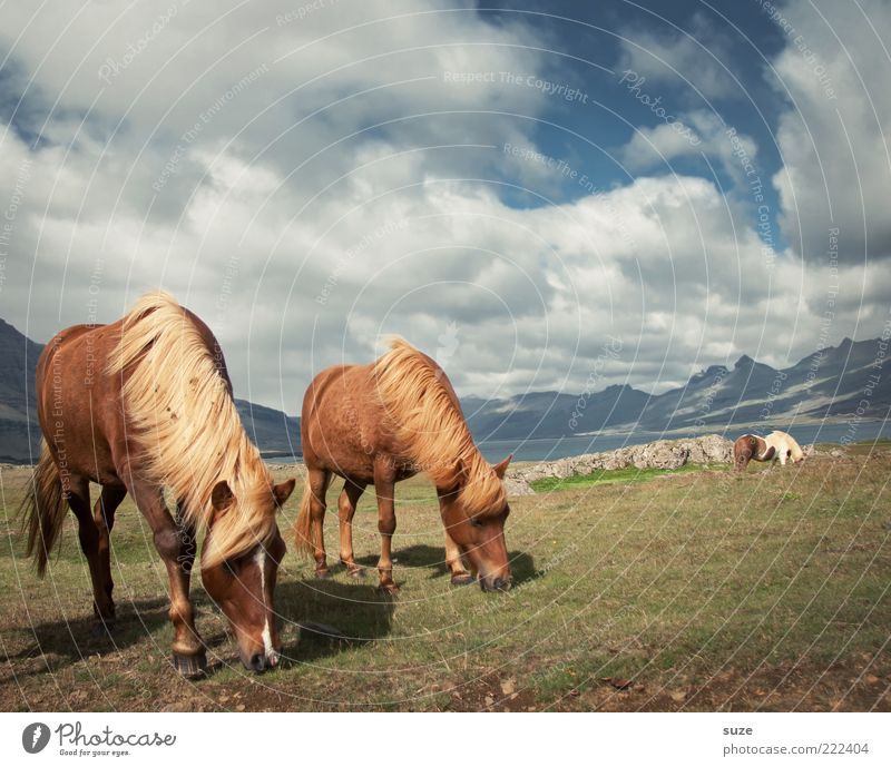 Beautiful weather Mountain Environment Nature Animal Sky Clouds Horizon Summer Wind Grass Meadow Farm animal Wild animal Horse 2 Pair of animals To feed