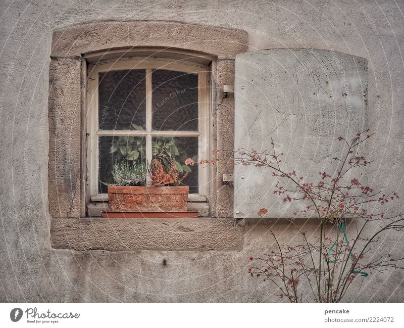 Old Town House (Residential Structure) Loneliness Window Autumn Sadness Retro Gloomy Uniqueness Old town Dry Fatigue Exhaustion Secrecy Alsace