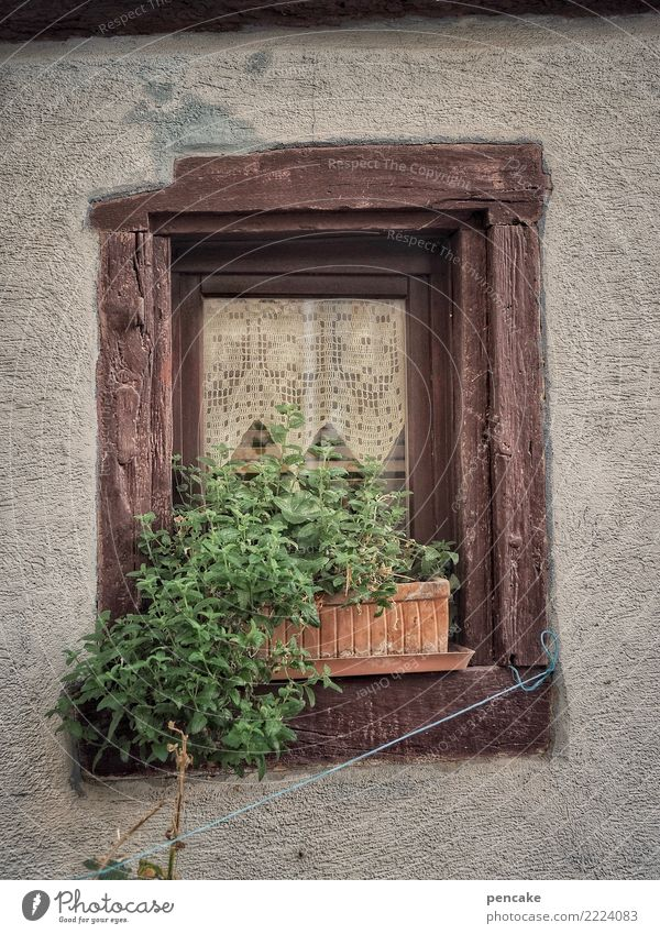 urban gardening (remake) Plant Old town Window Authentic Town Pot plant Window board Green Rope Wood Curtain Alsace Herbs and spices Colour photo Exterior shot