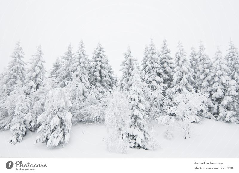 Nature White Tree Vacation & Travel Winter Snow Mountain Landscape Bright Ice Frost Fir tree Winter vacation Black Forest Coniferous forest