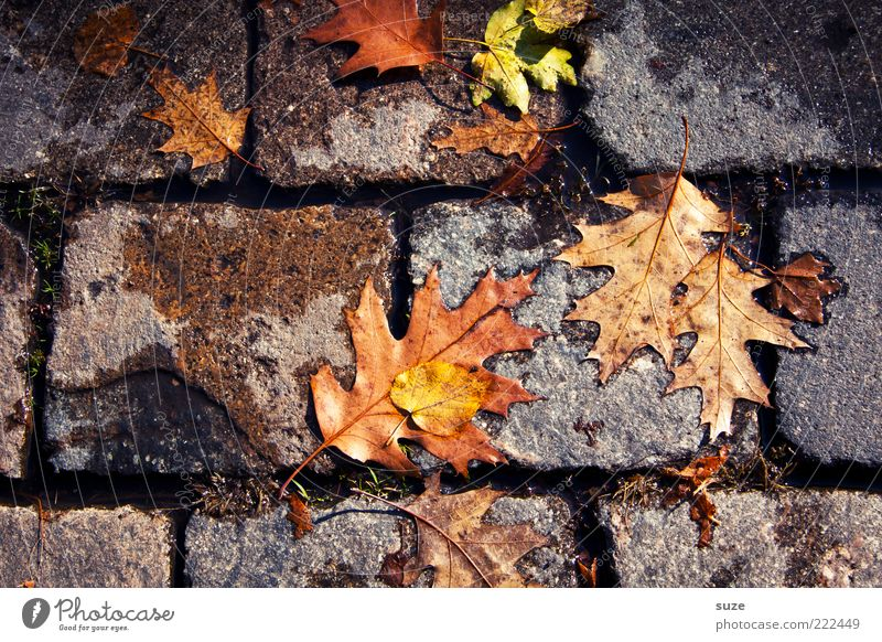 kick resistance Environment Nature Autumn Leaf Lanes & trails Old Authentic Dirty Emotions Autumn leaves Autumnal Seasons Colouring Floor covering Pavement