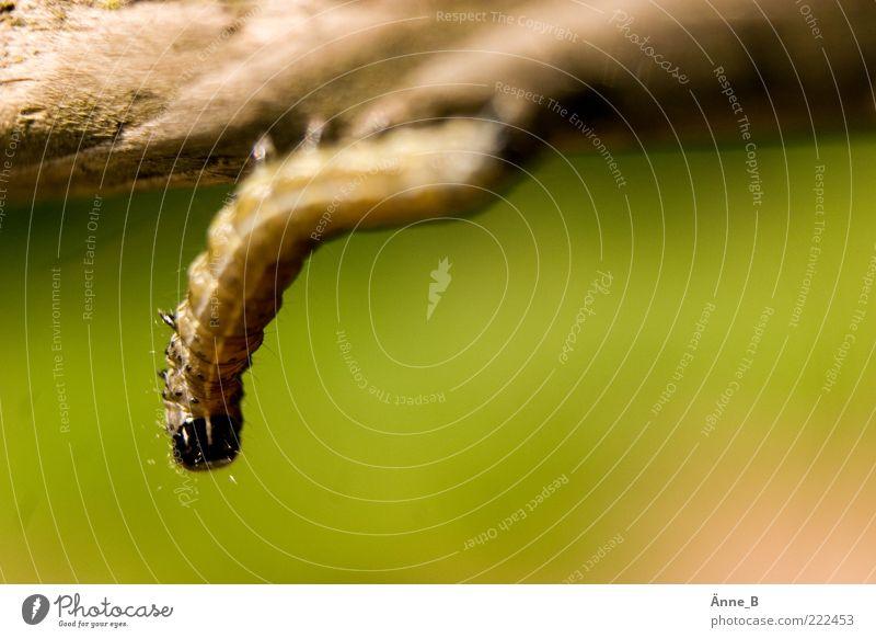 Nature Green Beautiful Summer Animal Black Yellow Playing Wood Brown Elegant Exceptional Hang Crawl Hold Caterpillar