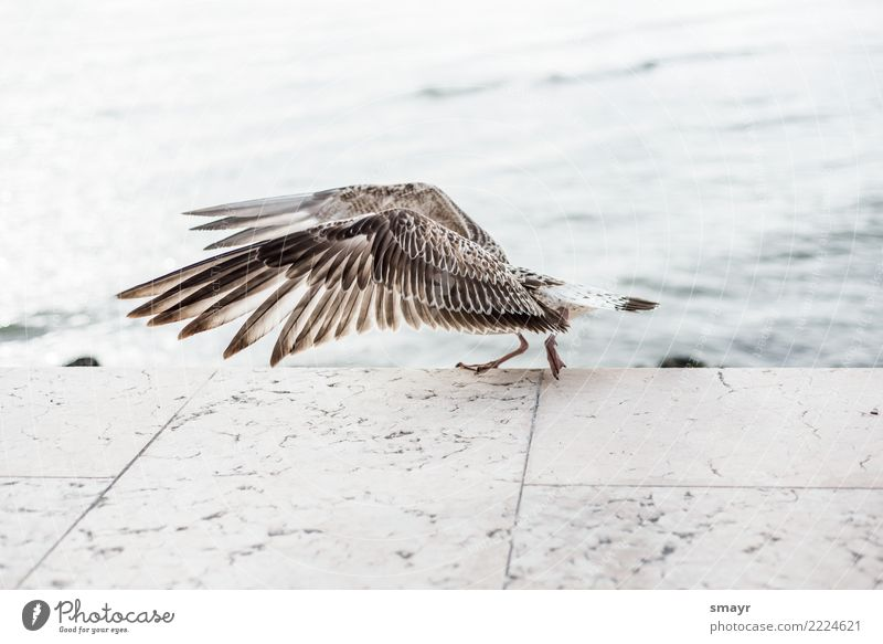 On the catwalk Animal Bird Wing 1 Movement Flying Walking Threat Gigantic Maritime Wet Wild Brown Gray Turquoise White Power Fear Nature Environment Seagull