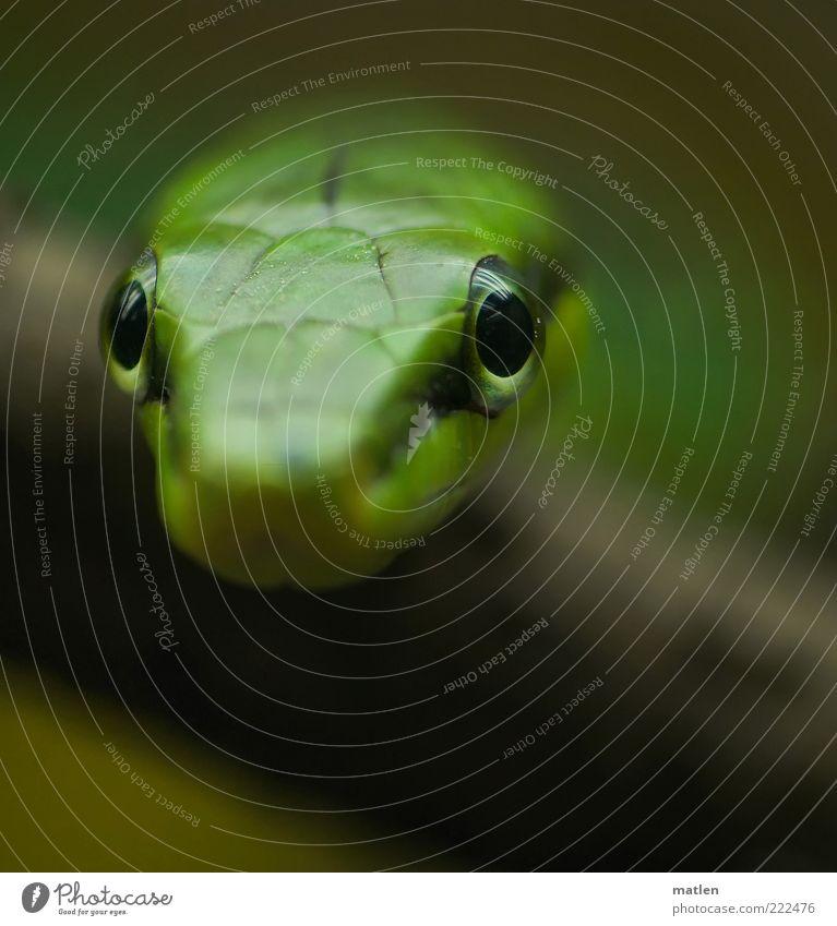Green Eyes Animal Observe Exotic Crawl Snake Reptiles Fix Living thing Focus on Snake skin
