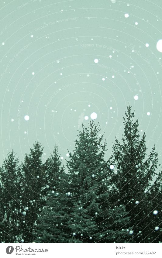 Disposable Christmas tree balls Environment Sky Winter Climate Snow Snowfall chill green Fir tree Snowflake Winter forest Winter mood Winter's day Flake
