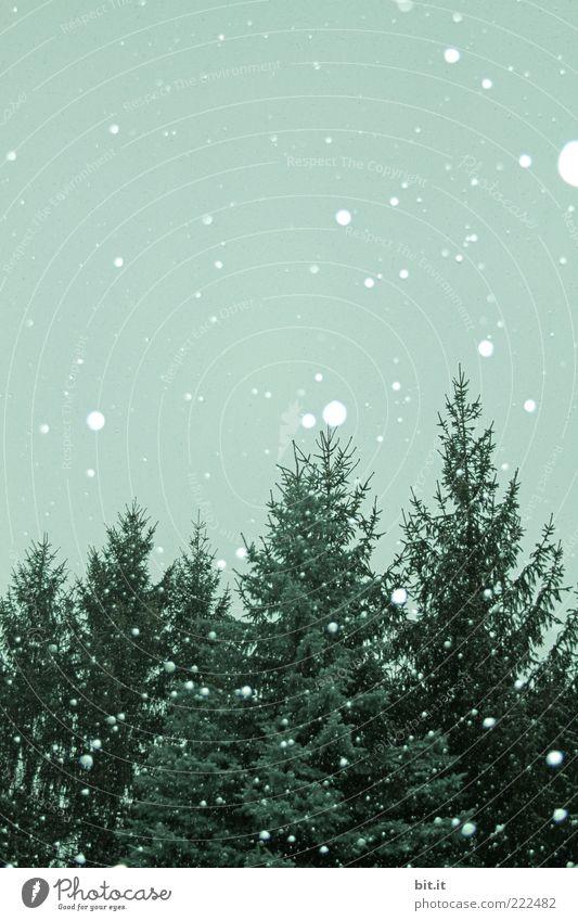 Sky Green Tree Winter Cold Environment Snow Snowfall Climate Fir tree Snowflake Flake Coniferous forest Forest Winter mood Winter forest