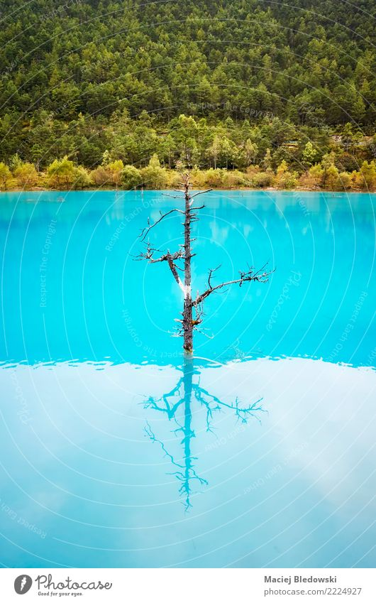 Lonely tree reflected in turquoise blue water. Nature Tree Park Forest Lake River Blue Turquoise Sadness Concern Loneliness Shame Remorse Uniqueness peaceful