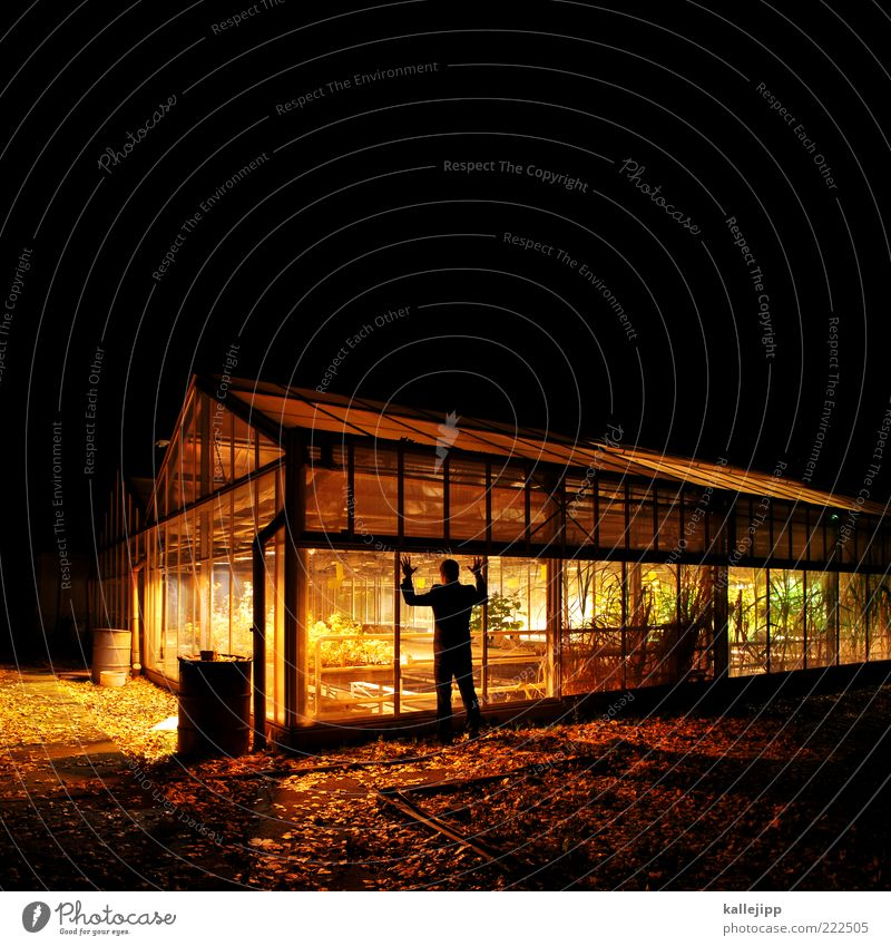 Human being Man Plant House (Residential Structure) Adults Dark Window Life Garden Lighting Masculine Growth Stand Observe Attempt Window pane