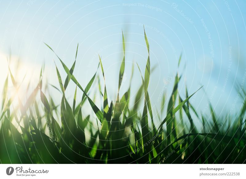 On the Field Agriculture growing Growth Detail Spring Summer Natural Nature Close-up Grass Seedlings Barley