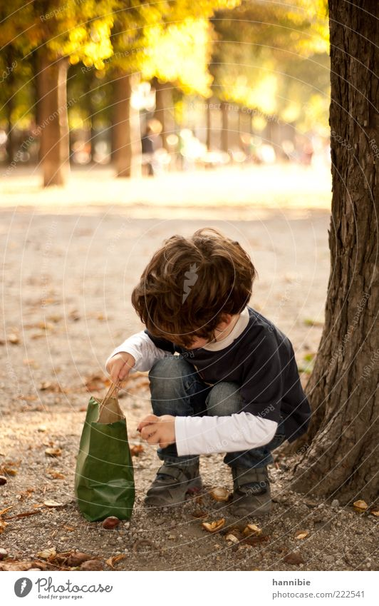 Human being Child Green Blue Tree Yellow Playing Autumn Boy (child) Park Brown Leisure and hobbies Infancy Search Concentrate Tree trunk