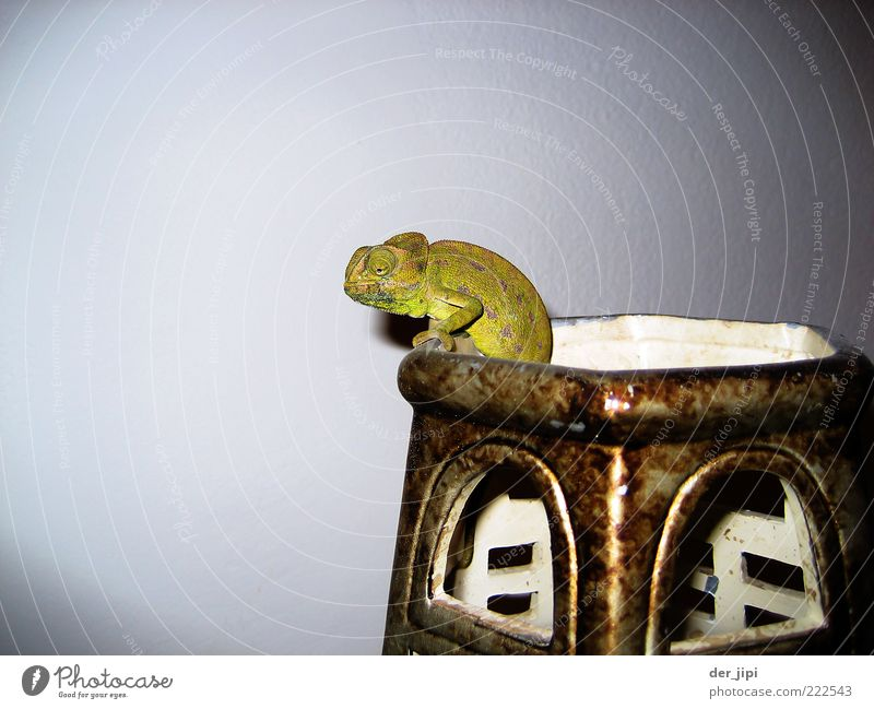 sepp Animal Scales Claw Paw 1 Wait Chameleon Reptiles Saurians Vase Containers and vessels Colour photo Interior shot Studio shot Detail Deserted