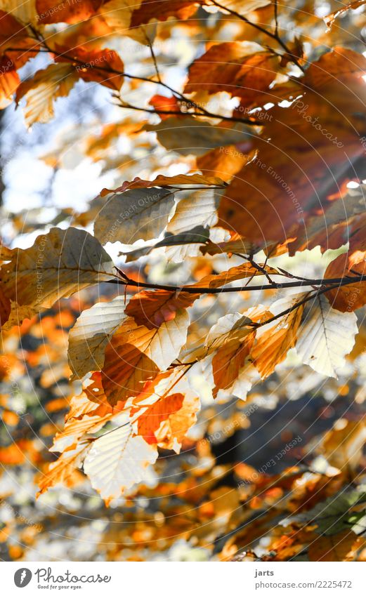 a piece from autumn I Nature Plant Sunlight Autumn Beautiful weather Tree Leaf Forest Natural Brown Orange Red White Serene Calm Change Colour photo