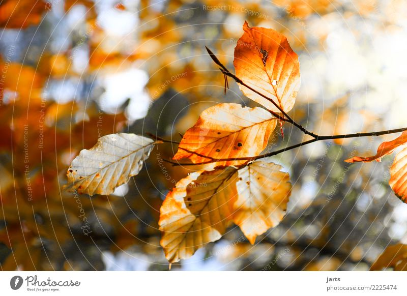 a piece from autumn II Nature Autumn Beautiful weather Plant Tree Leaf Forest Fresh Bright Natural Contentment Serene Patient Calm Hope Colour photo