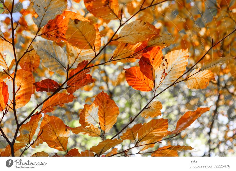 day 329 Nature Plant Tree Leaf Forest Natural Beautiful Orange Red Autumn Colour photo Multicoloured Exterior shot Deserted Day Sunlight Shallow depth of field