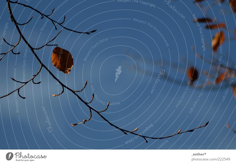 Nature Sky Blue Beautiful Leaf Cold Autumn Above Brown Tall Esthetic Change Natural Transience Twig Ease