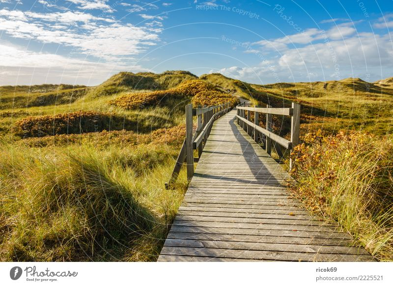 Landscape in the dunes on the island of Amrum Relaxation Vacation & Travel Tourism Island Nature Clouds Autumn Coast North Sea Bridge Lanes & trails Blue