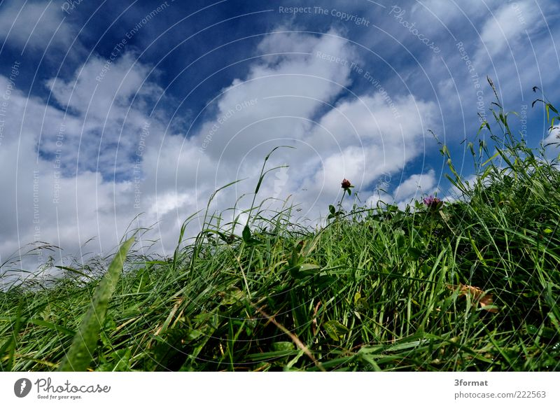 pasture Clouds Summer Grass Foliage plant Meadow Wet Damp Pasture Feed Green Blue Juicy Diagonal Tumble down Colour photo Multicoloured Exterior shot