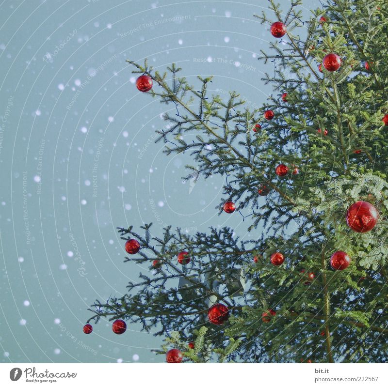 Christmas & Advent Sky Tree Green Blue Red Winter Snowfall Moody Feasts & Celebrations Glittering Decoration Christmas tree Kitsch Living or residing