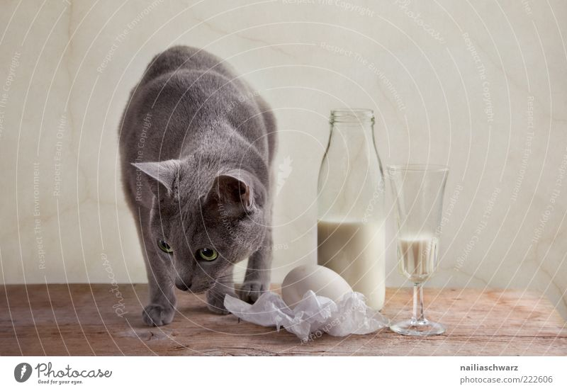 White Nutrition Animal Wood Gray Cat Bright Brown Glass Glass Food Table Beverage Esthetic Curiosity Egg