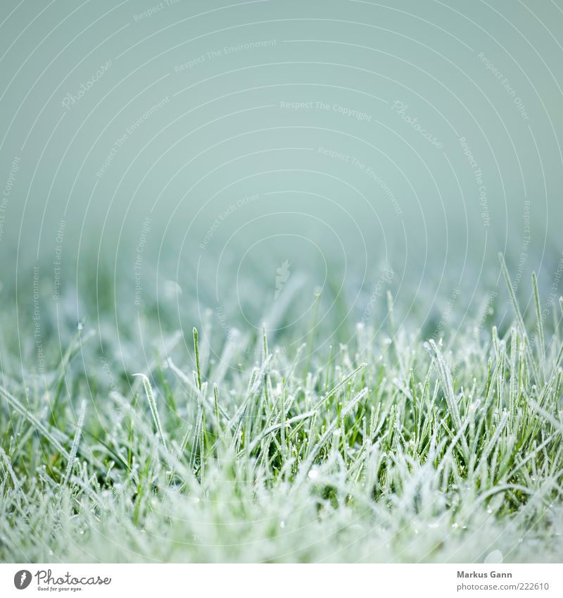 frost Winter Nature Plant Weather Ice Frost Meadow Freeze Cold Gray Green Symbols and metaphors Lawn Grass December November Temperature Colour photo