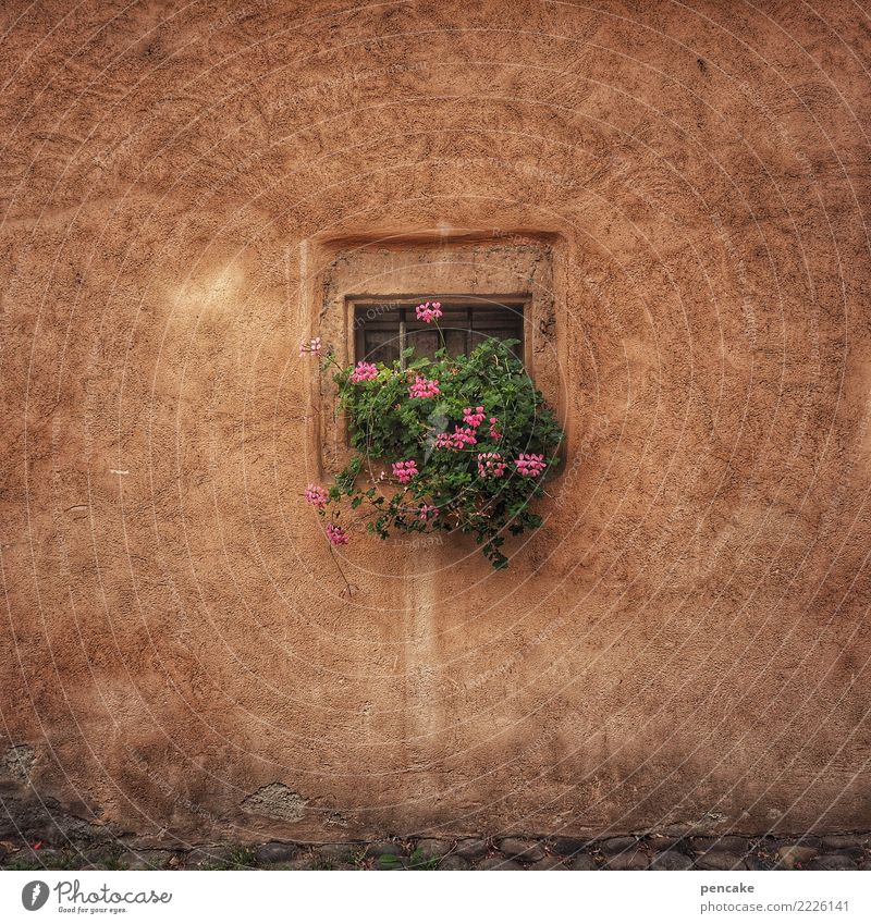 square root Plant Flower Old town House (Residential Structure) Building Architecture Wall (barrier) Wall (building) Window Happiness Cute Retro Town Idyll