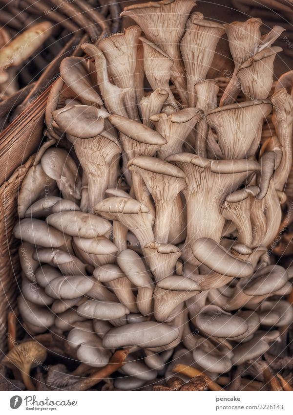 group photo Food Nutrition Authentic Uniqueness Delicious Mushroom Tree fungus Oyster mushroom Group photo Many Harvest Specialities Alsace Colour photo