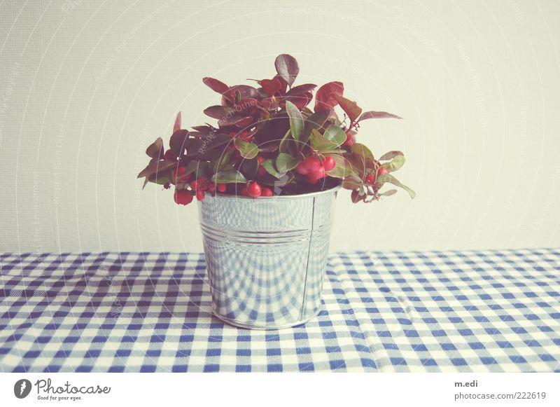 White Blue Plant Glittering Cloth Silver Checkered Tin Pot plant Holly