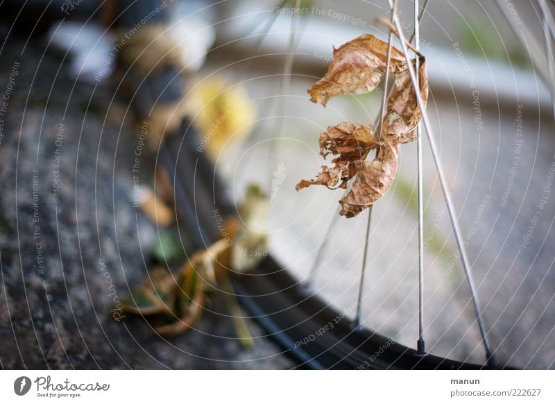 Leaf Street Autumn Bicycle Transport Perspective Change Transience Asphalt To hold on Contact Mobility Wheel Autumn leaves Tire Captured