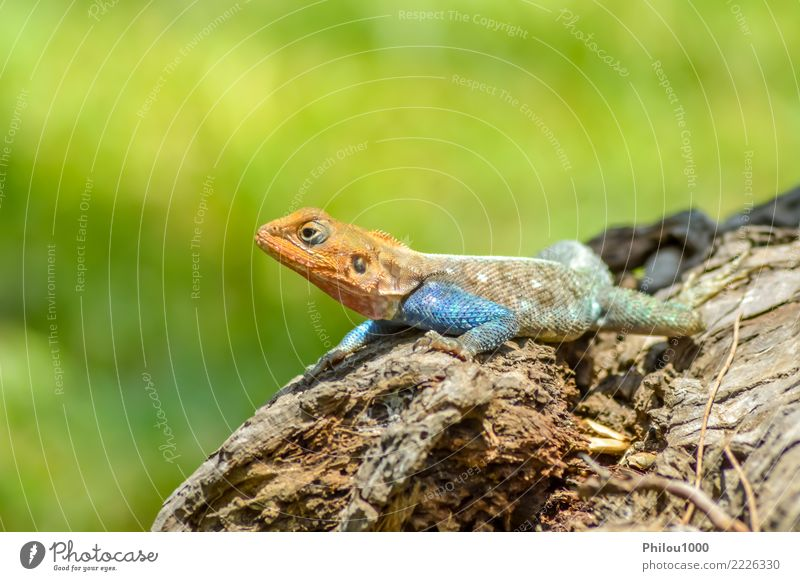 Lizard of all colors on a trunk in a garden Exotic Skin Nature Animal Leather Pet Dog Cat Snake Old Wild Green White Colour amphibian backdrop background