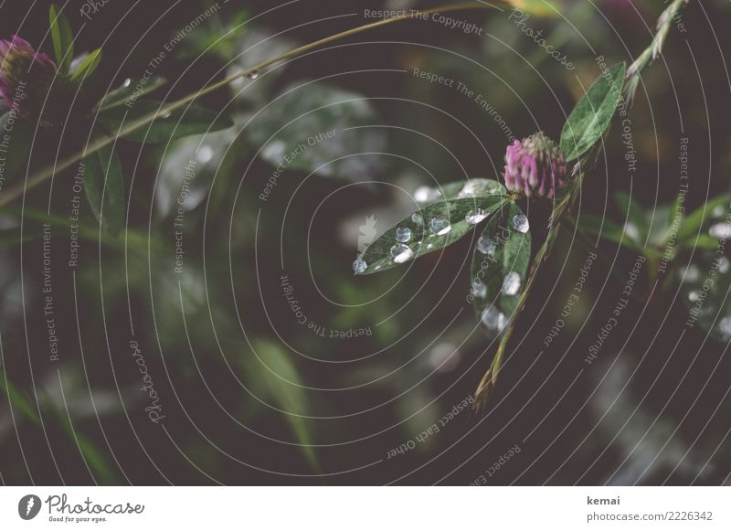 rope Harmonious Well-being Senses Relaxation Calm Leisure and hobbies Nature Plant Water Drops of water Summer Leaf Foliage plant Wild plant Cloverleaf