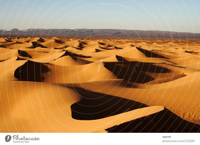in the evening in the Sahara Far-off places Freedom Nature Landscape Sand Cloudless sky Beautiful weather Warmth Desert Dune Natural Brown Yellow Gold Caution