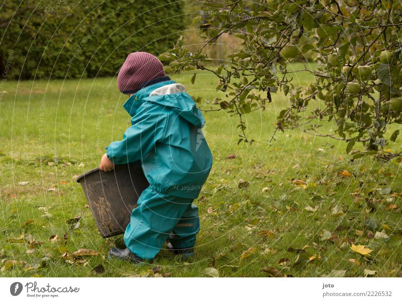 Child Leaf Joy Autumn Meadow Garden Trip Contentment Cute Help Discover Cap Toddler Anticipation Autumn leaves Autumnal