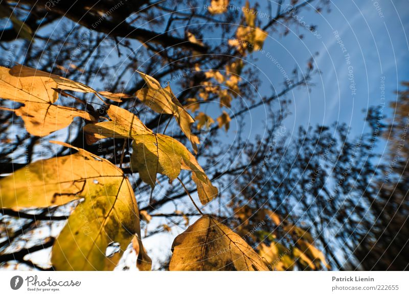 Nature Sky Tree Blue Plant Leaf Yellow Autumn Air Brown Environment Weather Natural Branch Decline Twig