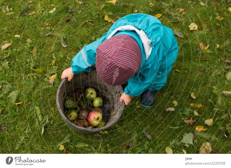 Child Healthy Eating Leaf Joy Autumn Meadow Garden Contentment Fruit Cute Help Discover Delicious Serene Apple