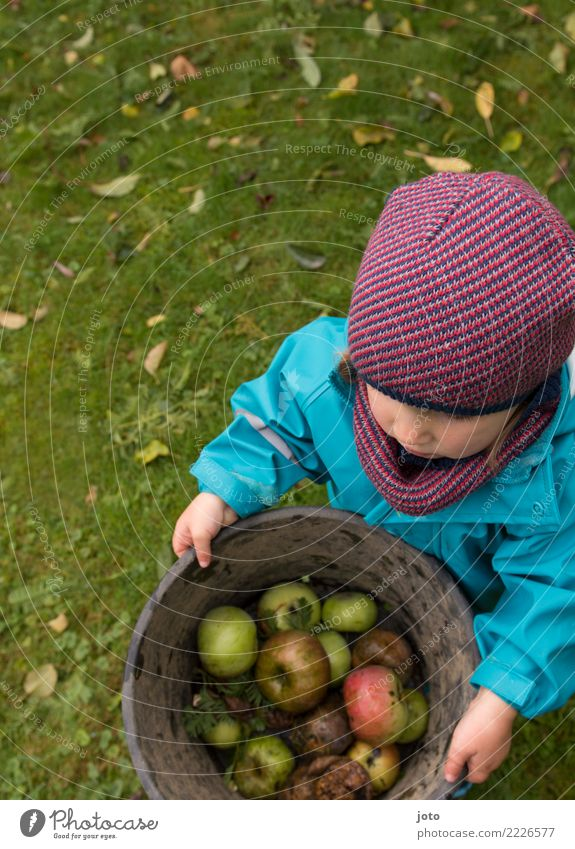 Collect apples Fruit Apple Organic produce Joy Healthy Eating Contentment Children's game Garden Study Toddler 1 - 3 years Autumn Leaf Meadow Cap Carrying Cute