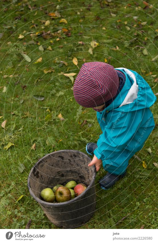 Half Full Fruit Apple Joy Leisure and hobbies Playing Garden Study Child Infancy 1 Human being 1 - 3 years Toddler Environment Nature Autumn Leaf Meadow Cap