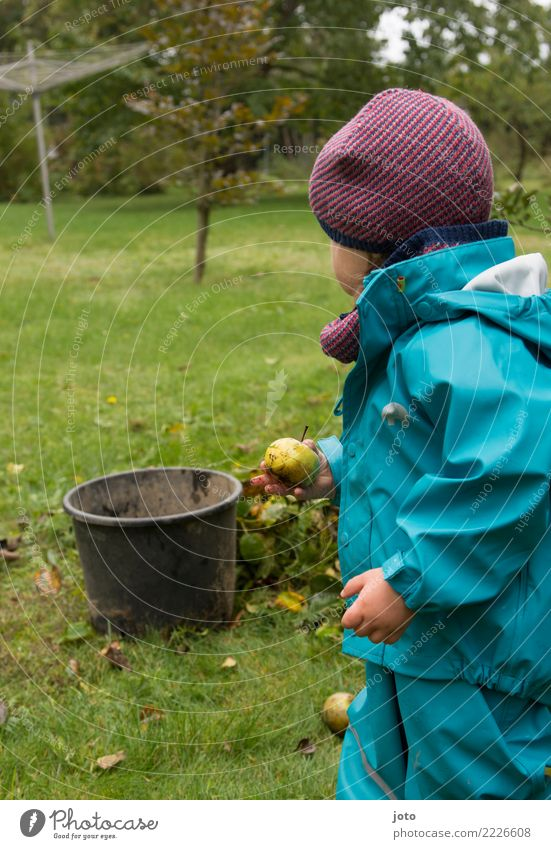 found another Fruit Apple Joy Leisure and hobbies Playing Garden Child Study Infancy 1 - 3 years Toddler Environment Nature Autumn Leaf Meadow Cap Observe Touch