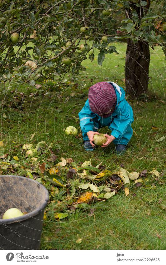 lift Apple Joy Healthy Eating Children's game Garden Study Gardening Toddler 1 - 3 years Autumn Leaf Meadow Rubber boots Cap Discover Cute Help Effort Bucket