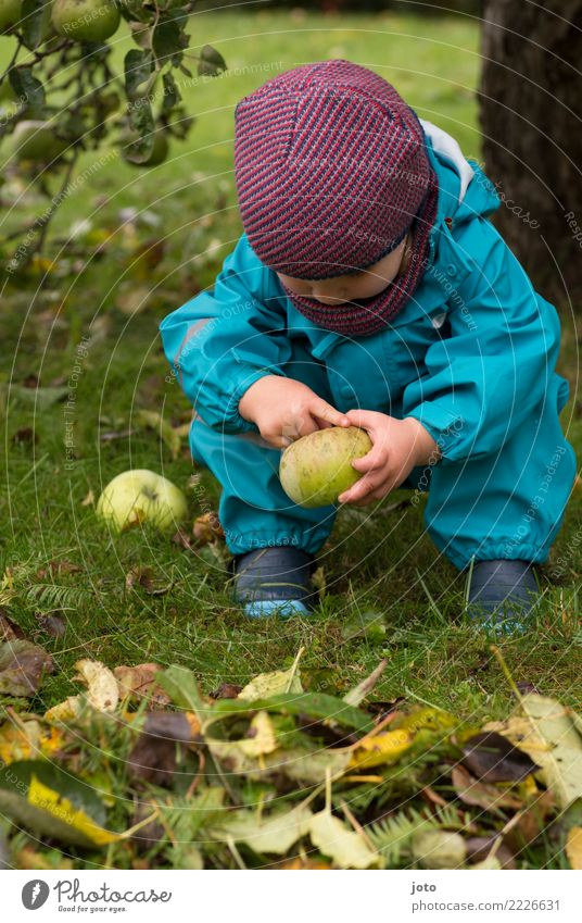 Child Leaf Joy Autumn Healthy Meadow Garden Freedom Trip Contentment Fruit Nutrition Study Cute Touch Discover