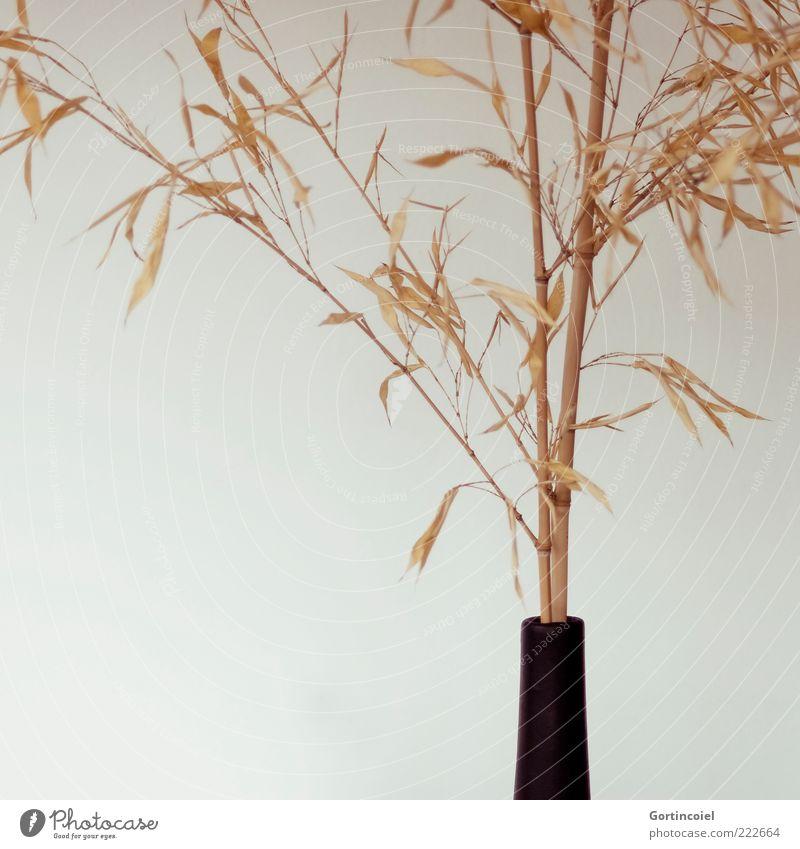 Plant Leaf Style Design Lifestyle Decoration Dry Vase Bamboo Bamboo stick Minimalistic Bamboo pole